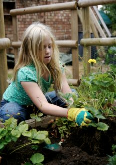 here is a girl in a garden planting a strawberry plant